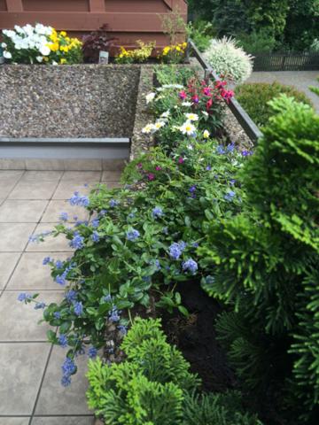 Balkonkasten Bepflanzung, Kübelpflanzen