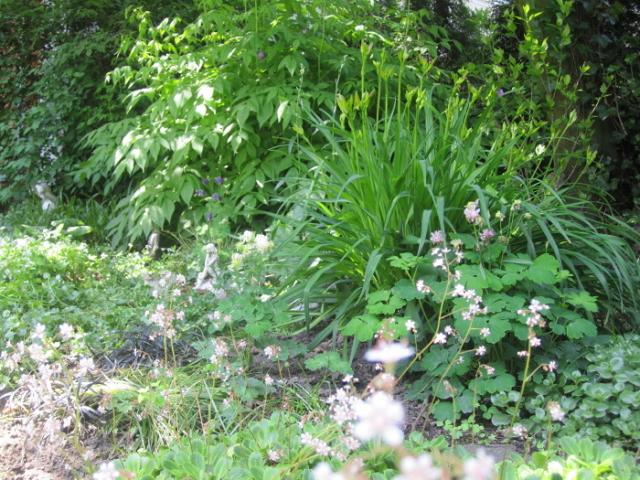 Schattengarten Stauden Schattenbeet